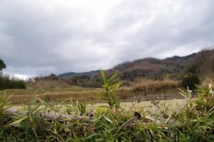 景行天皇陵(渋谷向山古墳)付近