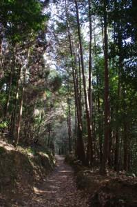 山の辺の道(桧原神社~玄賓庵)