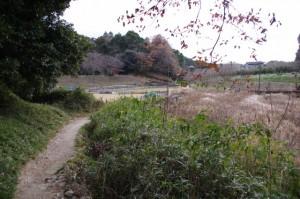 山の辺の道(玄賓庵~狹井神社)