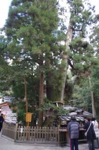 巳の神杉(大神神社)