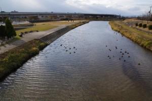 大向寺橋から望む初瀬川