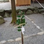 櫲樟尾神社