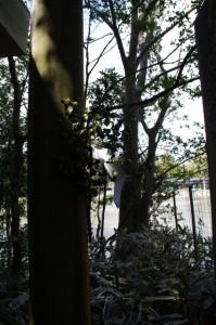 茜社の鳥居と勾玉池