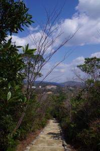 横山ビジターセンター方面を望む(横山展望台への遊歩道)