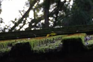 御厩の屋根(外宮)