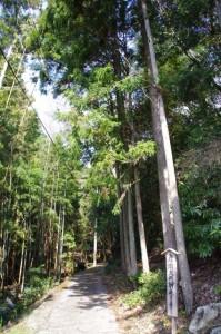 彦瀧大明神(鳥羽市)への参道