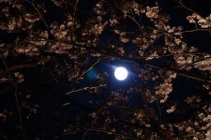 夜桜(王中島公民館)