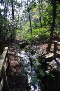 御池から勾玉池への流れ(亀石の上にて)