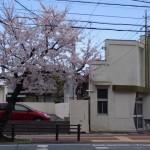 桜(NTT西日本 伊勢志摩ビル前)