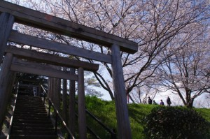 楠大明神の鳥居と桜(宮川堤)