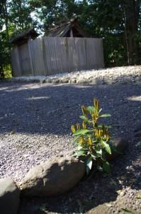 宇須乃野神社、縣神社