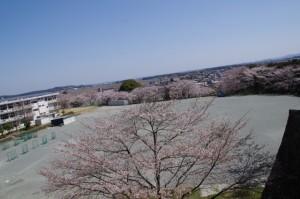 桜(田丸城址から玉城中学校を望む)
