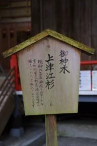 御神木 上津江杉(御杖神社)
