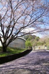 山白山比咩神社(白山町川口)