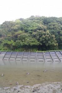 朝熊川越しの朝熊神社の社叢(虎石の前から)