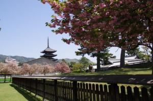 興福寺北円堂特別開扉入口前から望む五重塔