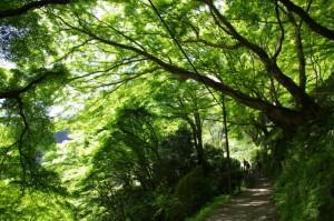 吉野ロープウェイ千本口駅前から七曲坂へ