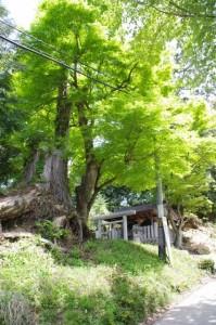 3521ポイント先の祠(近鉄てくてく奈良-32まっぷ)