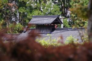 花矢倉展望台付近の民家の越屋根(うだつ)