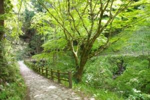 谷筋の橋へ(如意輪寺から吉水神社へ)