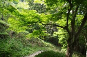吉野駅への近道