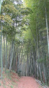 6820ポイント手前の竹やぶ(近鉄てくてく奈良-7まっぷ)