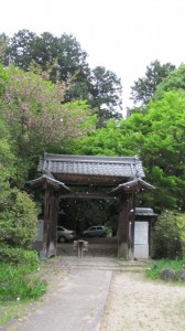 桜散り舞う(弘仁寺)