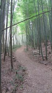 5998ポイント付近の竹林(近鉄てくてく奈良-8まっぷ)