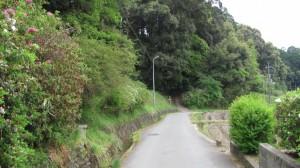 石上神宮への参道