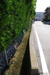 大土御祖神社前の水路