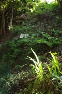 地蔵塚付近(長谷観音道)