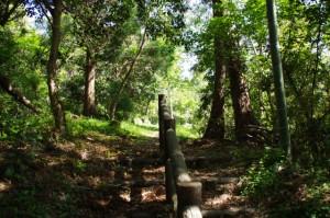 近津長谷城跡(城山)への階段