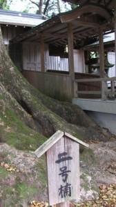 二号楠(水屋神社)