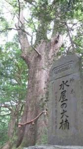 水屋の大楠(水屋神社)