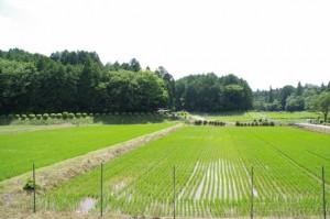 農薬散布用大型ラジコンヘリ