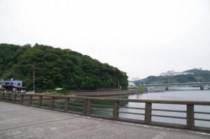 安楽島橋(加茂川)から望む赤崎神社の社叢