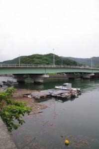 安楽島大橋(加茂川)越しに望む赤崎神社の社叢
