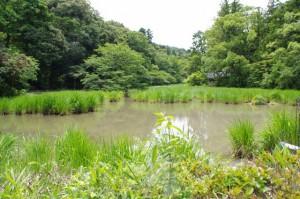 勾玉池(茜社の東側)