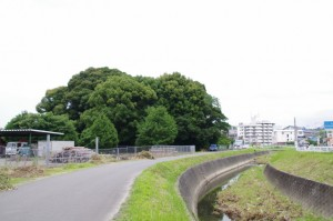 田上大水神社の社叢