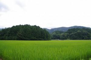 千の杜~園相神社への途中