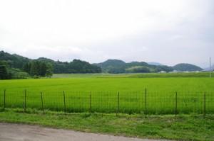 川原神社からの風景