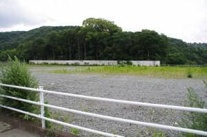 県道22号線から望む川原神社の社叢