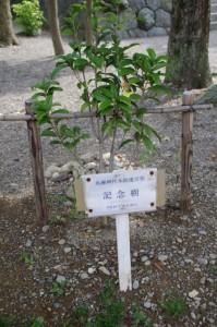 馬瀬神社本殿遷宮祭 記念樹
