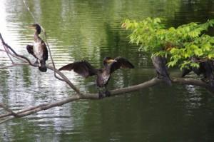 栄通神社の隣の池