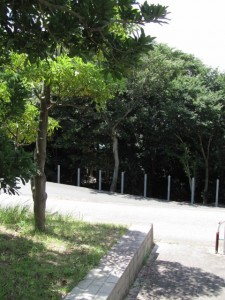 大湊海岸から望む日保見山八幡宮の社叢(伊勢市)