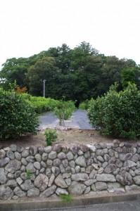 茶畑と久具都比賣神社の社叢