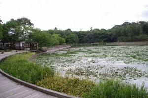 深田池(橿原神宮)
