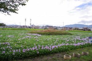 西塔跡(本薬師寺)