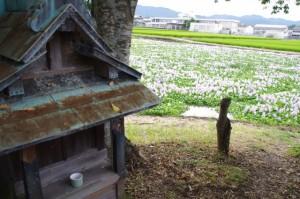 東塔跡(本薬師寺)