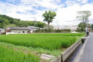 法然寺から天岩戸神社へ